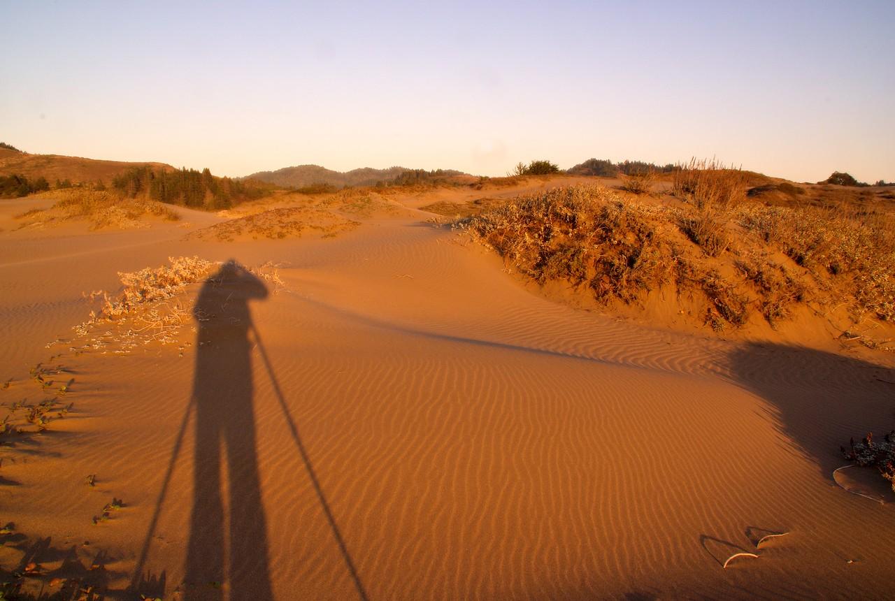 shadows ten mile river beach