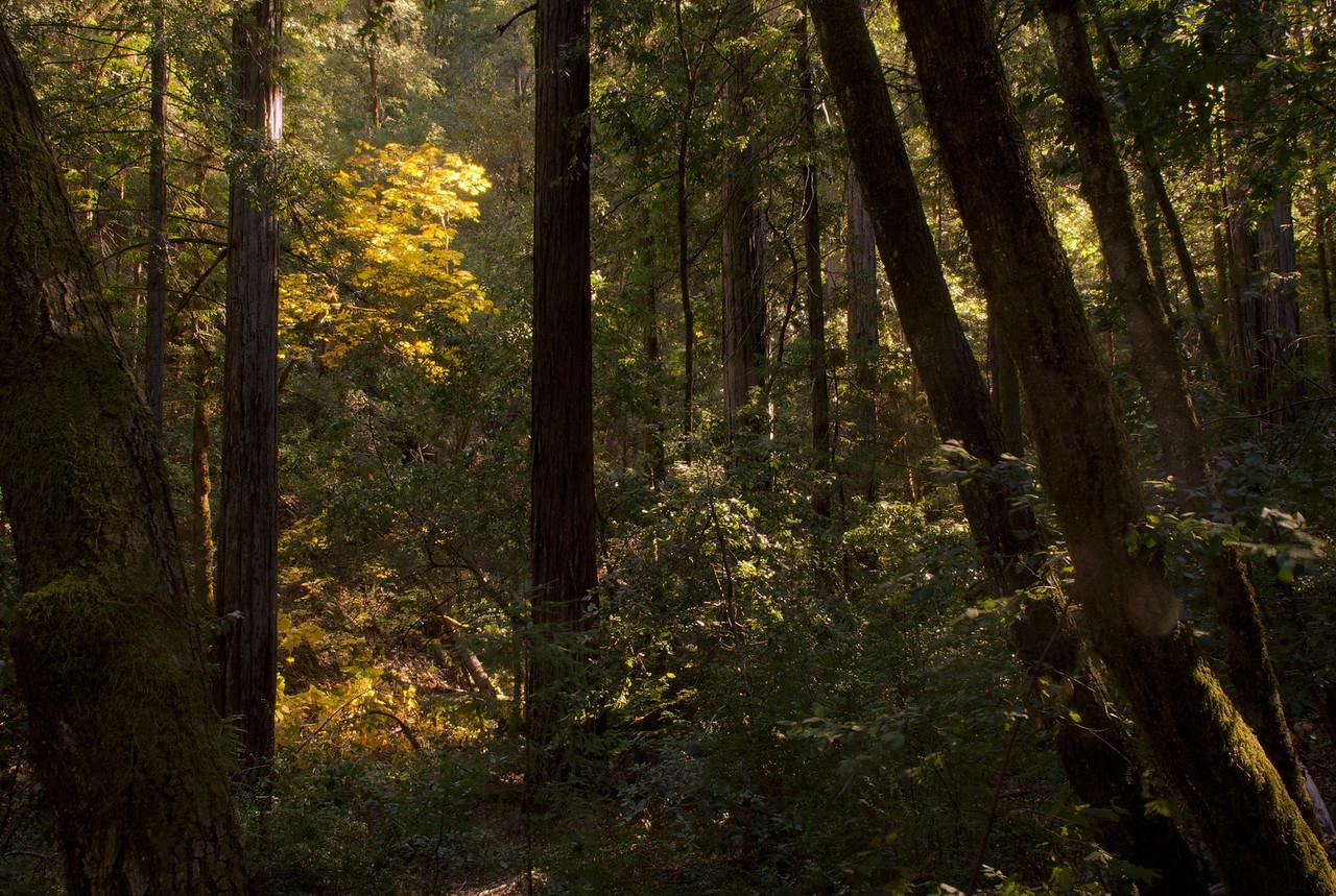 Montgomery grove