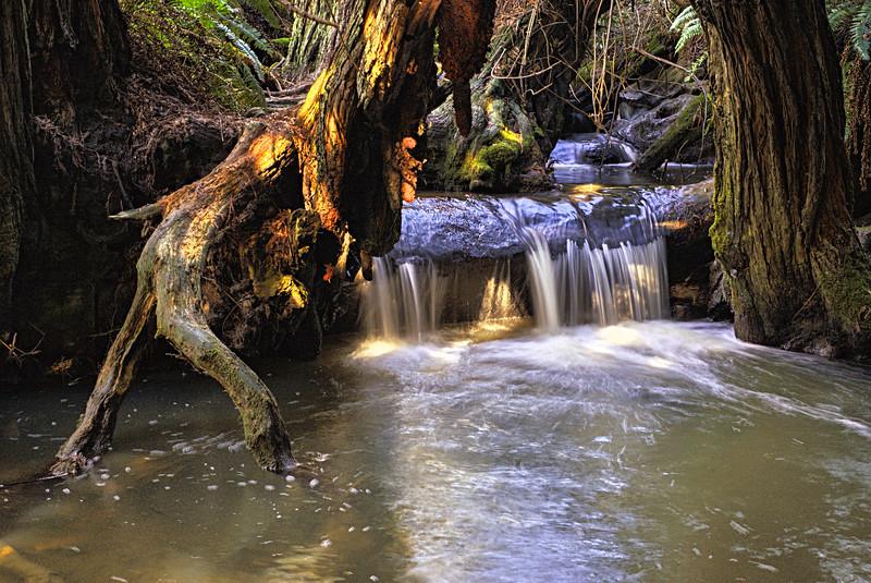 Salal Trail Falls