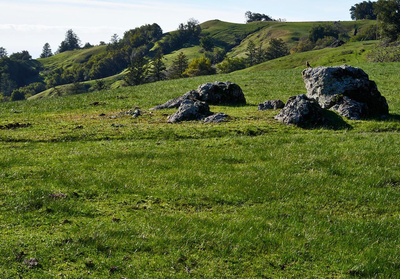 Meadow Sonoma Coastal Mountains