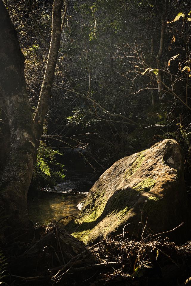 Rocks Trees and Shadows