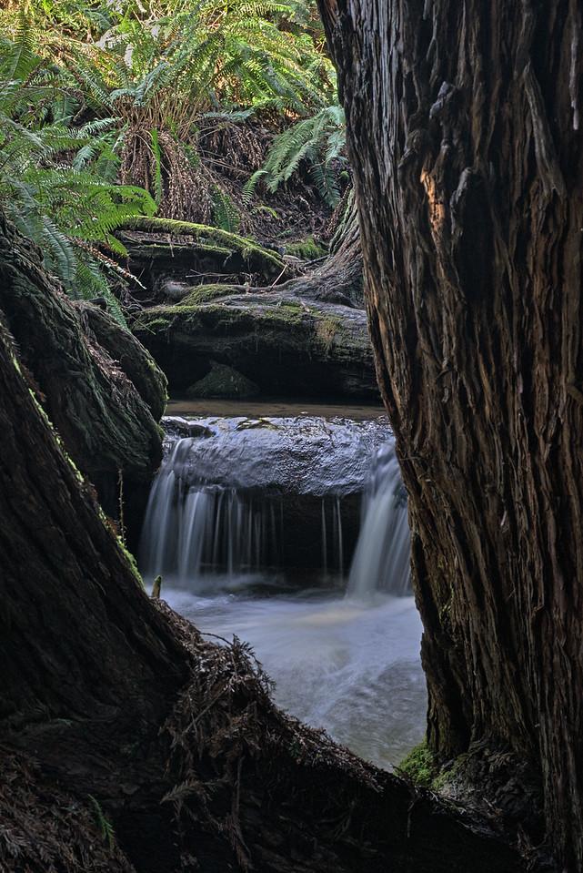 Framed by Redwoods