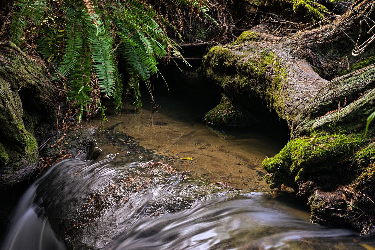 Small Pool Salal Creek