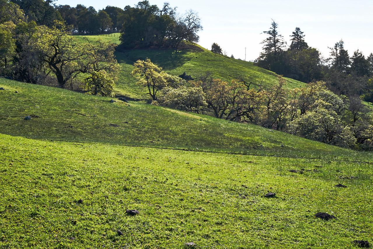 Sonoma Coastal Mountains Green from December Rain