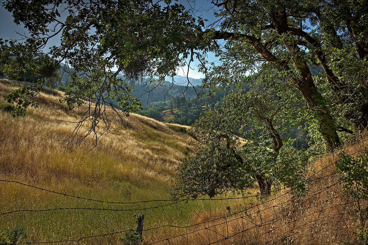 Garberville hillside - HDRI image