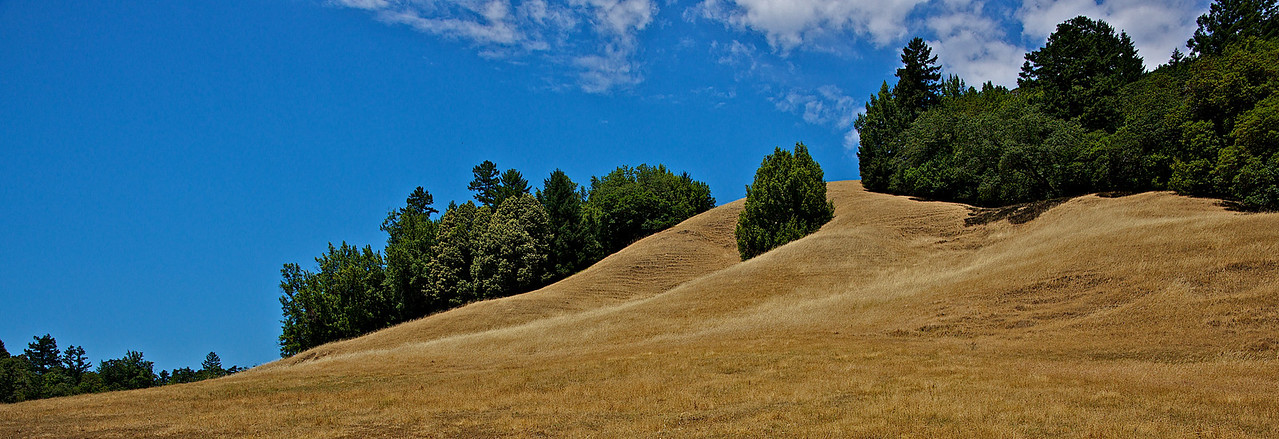 the green and golden hills of California