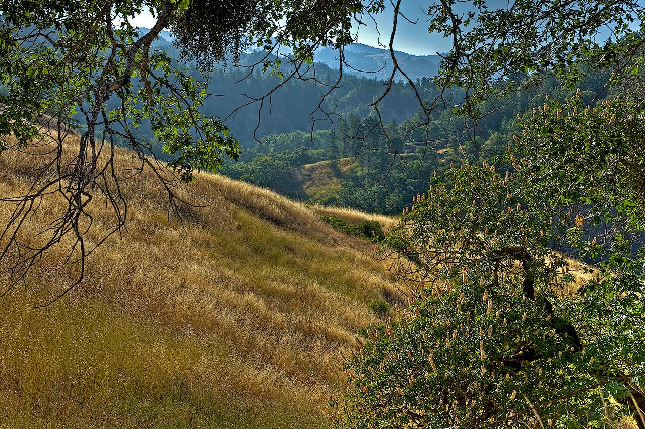 Garberville hillside 2 - HDRI image