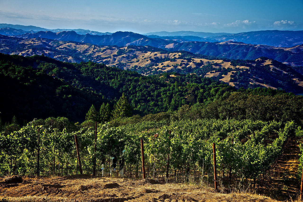 The green and golden hills of Sonoma County.