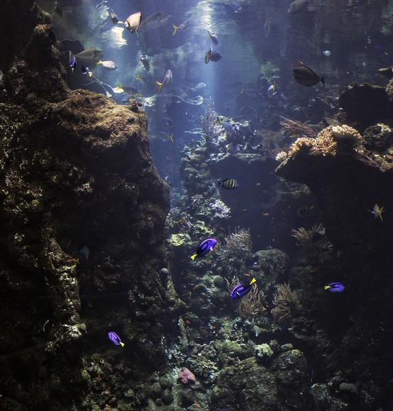 Reef Panorama