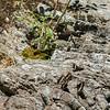 Rock and Butterflies