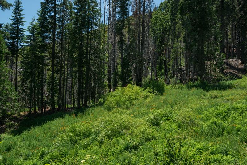 Bear Wallow Meadow