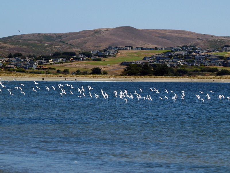 Birds in Bolinas, CA