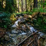 Little falls, big redwoods I