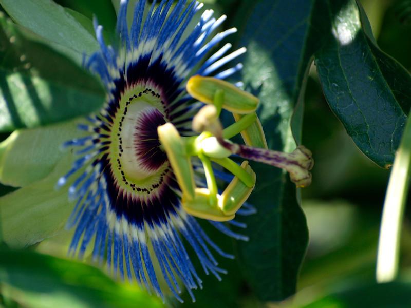 shflower2