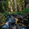 Little falls, big redwoods II