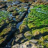 Algae-coated beach plateau