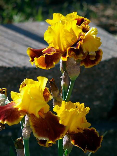 shflowers1