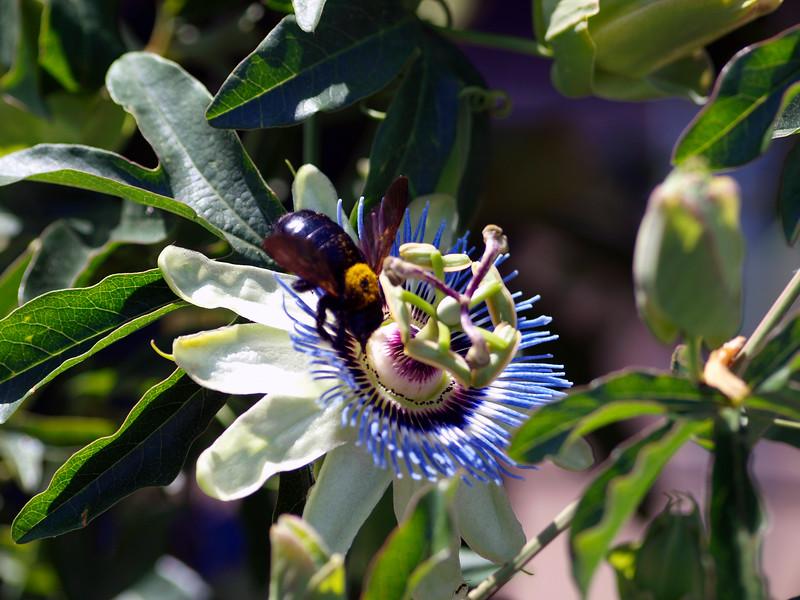 shflowerbee1