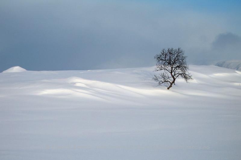 Winter Tree, Kvaløya, Norway