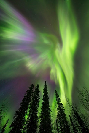 Northern Lights Yukon Canada