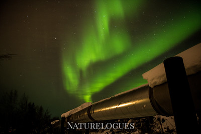 Northern Lights Over Alaska Pipeline