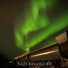 Northern Lights Over Alaska Pipeline