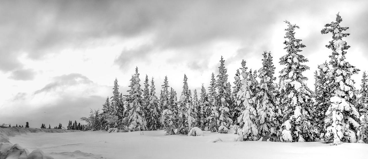 Alaska Snow