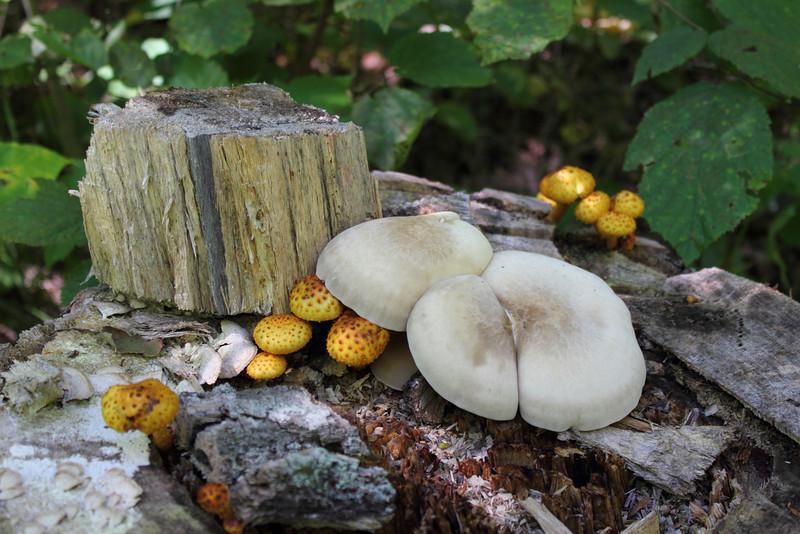 Fungi on Fallen Log