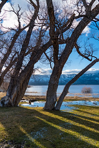 Willow Trees, Washoe Lake 3624