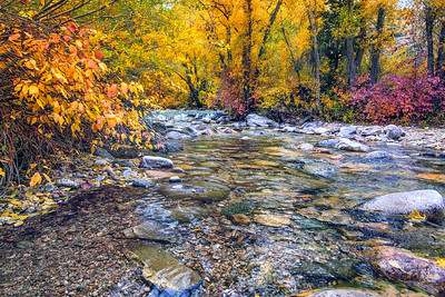 Lamoille Creek in Fall 2329