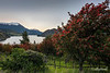 Landscape with Chilean firebush
