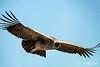 Learning to soar