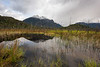 Burned out trees, pond weeds and reflections, snow on mountain, X-904, Tortel, Patagonia