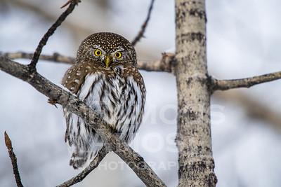 OWL_1699