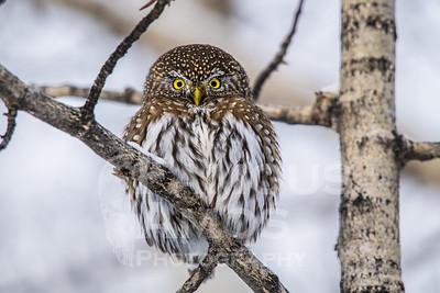 OWL_1690