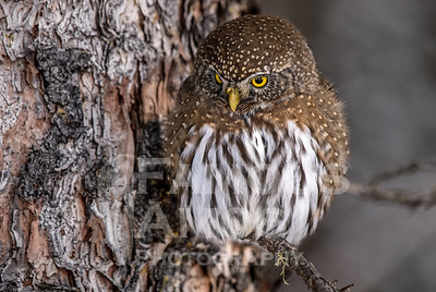 OWL_1474