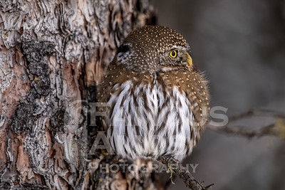 OWL_1486