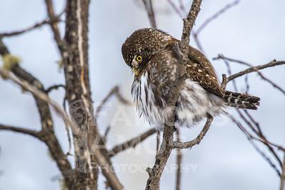 OWL_1926