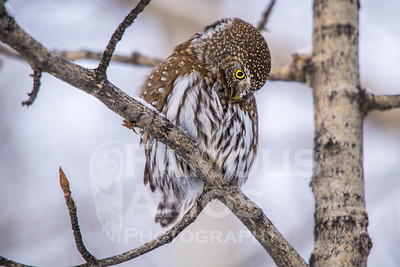 OWL_1694