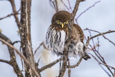 OWL_1887