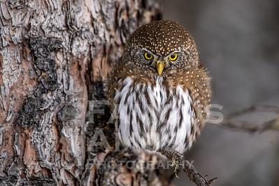 OWL_1463
