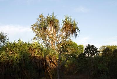 Darwin - September 2008 pt. 1