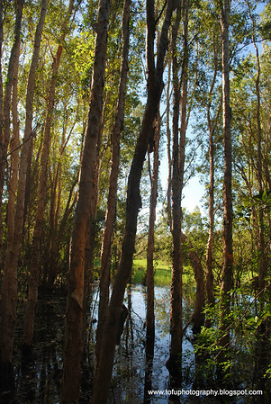 Fogg Dam walk pt. 1 - April 2008