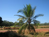 Beautiful tree in the Aboriginal community of Galiwinku, Elcho Island in May 2008
