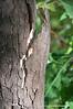 Tree bark near the abandoned Dhamiyaka Outstation near Gapuwiyak in the Northern Territory photographed in January 2009