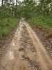Road to Baralminar Waterhole, Gapuwiyak, Northern Territory, January 2009