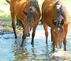 Horses at Kakadu National Park, Australia, March 2008