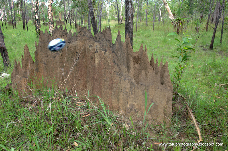A magnetic termite mound  at the Baralminar River near the Aboriginal community of Gapuwiyak in Arnhem land, Northern Territory in January 2009. The kids were kicking a football!