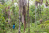 Boys looking for saplings from which to make fishing spears (tridents) in rainforest outside Gapuwiyak in the Northern Territory of Australia in January 2009