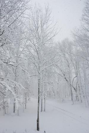 Snow Tree Front